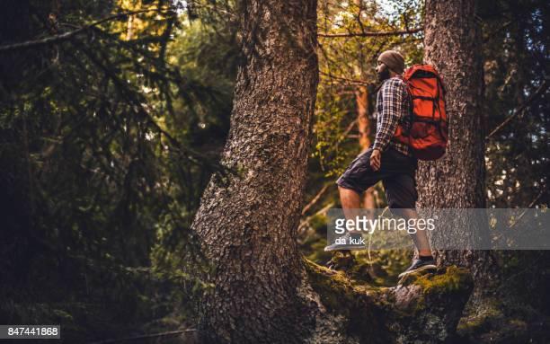 夕暮れの霧の森で単独でハイキング旅行者