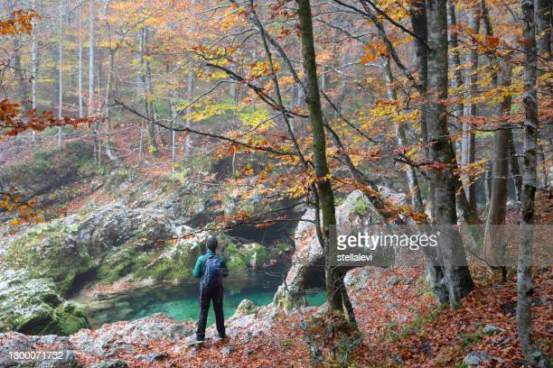 traveler hiking in the forest. - stellalevi stock pictures, royalty-free photos & images