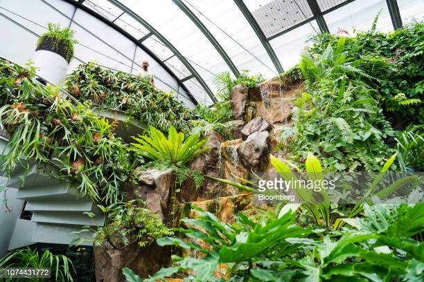 A traveler looks out next to a made made waterfall in the Butterfly Garden at Terminal 3 of Changi Airport in Singapore on Thursday Dec 13 2018...