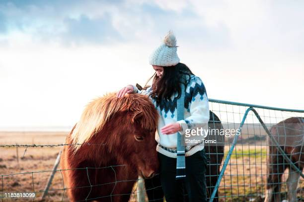 traveler att göra vänner med bedårande isländska hästar - pony play bildbanksfoton och bilder