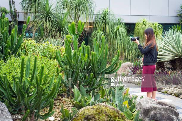 A traveler takes a photograph in the Cactus Garden at Terminal 1 of Changi Airport in Singapore on Thursday Dec 13 2018 Singapore'sChangiAirport...