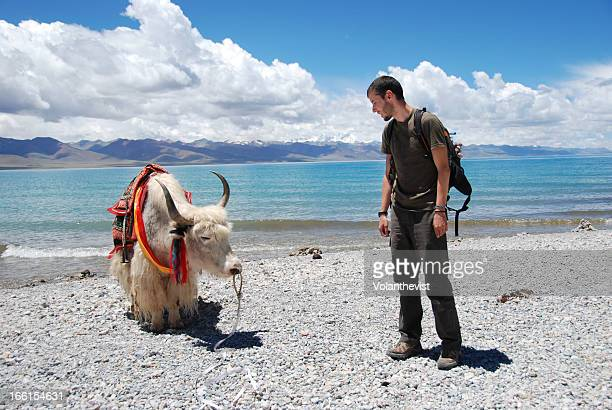 traveler with a yak at nam-tso lake. backpacker - asian ox imagens e fotografias de stock