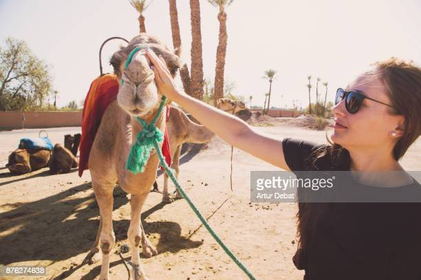 Traveler woman caress nice camel in the Palmeraie of the surrounding of Marrakesh a nice palm tree place with desert and nice landscape with camels to see during road trip in the Morocco.