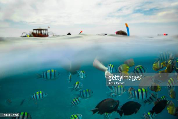 traveler woman doing snorkel with beautiful underwater view and sea life close to gili islands with colorful fishes and corals during vacations in indonesia. - gili trawangan stock photos and pictures