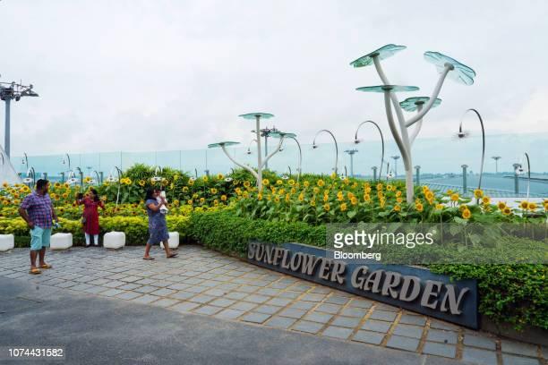 Travelers walk through the Sunflower Garden at Terminal 2 of Changi Airport in Singapore on Thursday Dec 13 2018 Singapore'sChangiAirport...