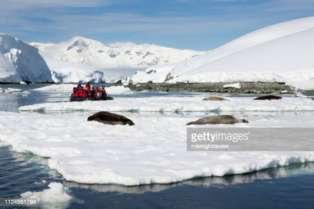 Travelers watch weddell seals relax Dallmann Bay ice Melchior Islands Anvers Island mountain glaciers Antarctica