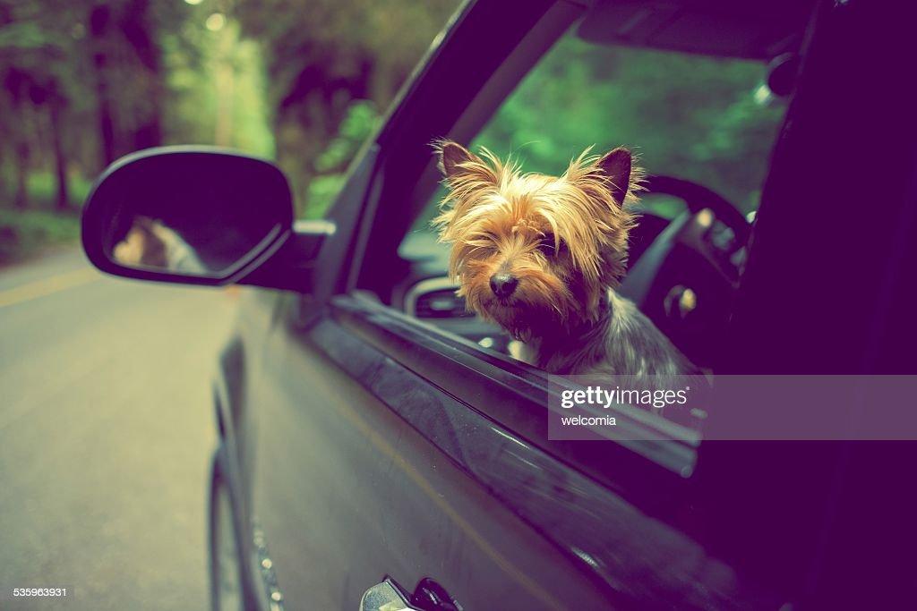 Traveling with Dog : Stock Photo