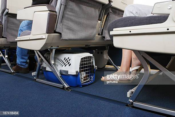 traveling with pet on airplane - gchutka stock pictures, royalty-free photos & images