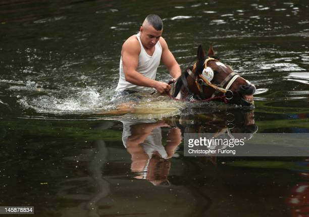 A traveller washes his horse in the cold waters of the River Eden in preparation for selling at the Appleby Horse Fair on June 7 2012 in Appleby...
