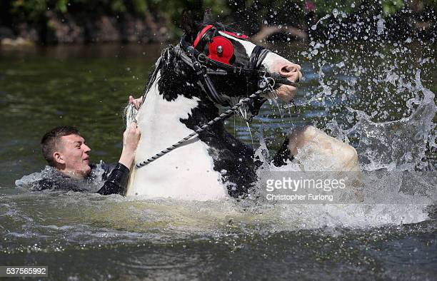 A traveller washes his horse in the River Eden during the Appleby Horse Fair on June 2 2016 in Appleby England The Appleby Horse Fair has existed...