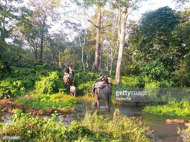 Travellers riding elephen,Jaldapara Reserve forest
