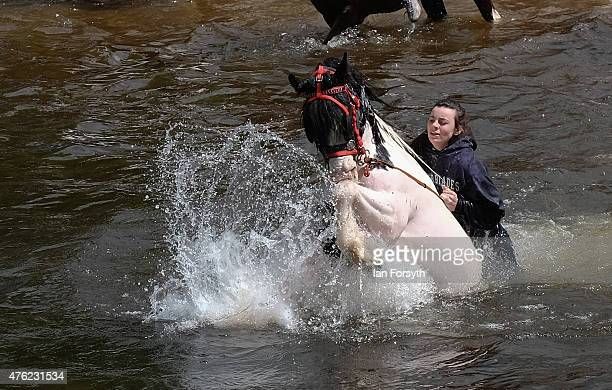 Travellers take their horses into the river Eden as is traditional to wash them ahead of potential sales during the Appleby Horse Fair on June 7 2015...
