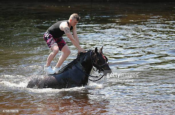 Travellers wash their horses and traps in the River Eden during the Appleby Horse Fair on June 4 2013 in Appleby England The Appleby Horse Fair has...