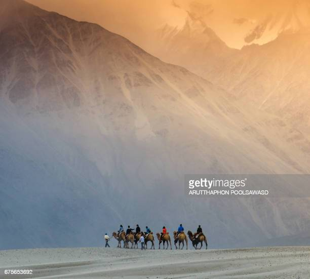 travellers with camels at Nubra Valley , Ladakh , North India