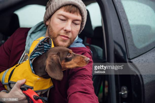 travelling to the beach - pet clothing stock pictures, royalty-free photos & images