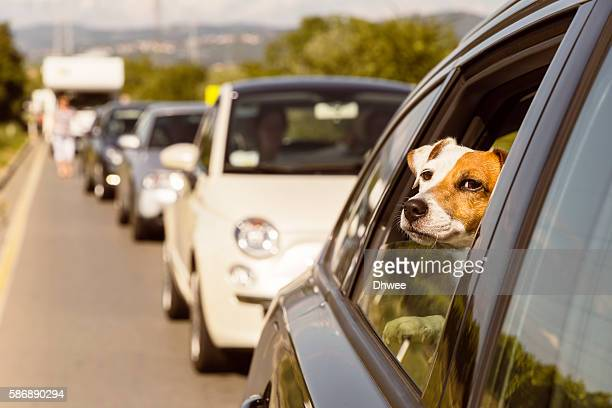 Travelling With Pet, Stuck In Traffic