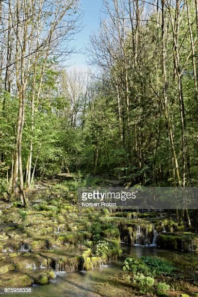 Travertine terraces, travertine creek in the natural monument Lillachtal, Weissenohe-Dorfhaus, Franconian Switzerland natural preserve, Upper Franconia, Franconia, Bavaria, Germany