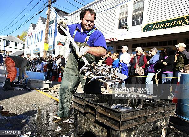 Travis Burnham of Boothbay shovels herring into trays during the bait shoveling race at the 37th annual Fishermen's Festival in Boothbay Harbor on...