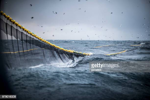 trawl industrial fishing net - fishing industry stock pictures, royalty-free photos & images