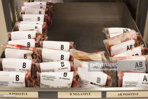 tray of b positive blood bags - blood group stock pictures, royalty-free photos & images