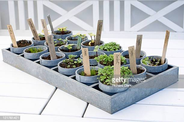 Tray of mixed potted seedlings (Part of series)