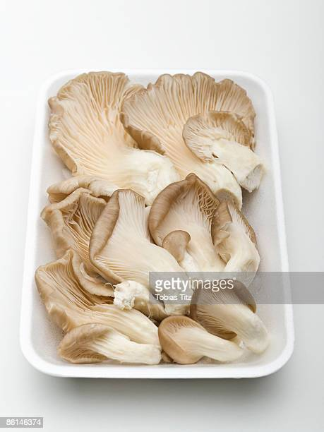Tray of oyster mushrooms