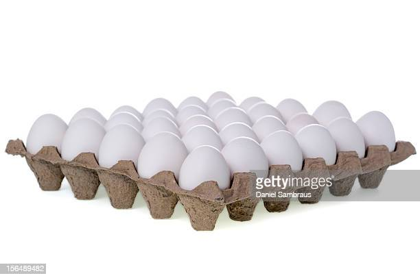 A tray of white eggs, isolated on white