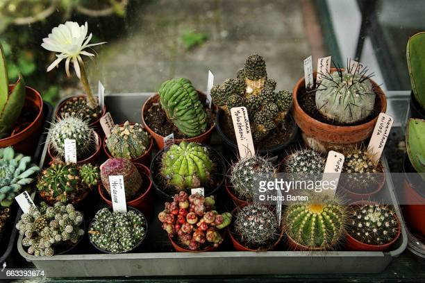 tray with different cactusen