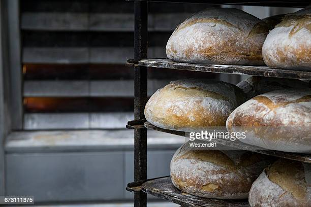 Trays of bread in a bakery