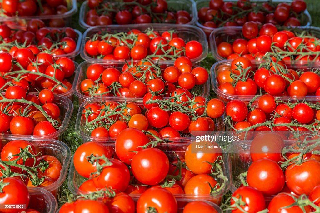 trays of cherry tomatoes : Stock Photo