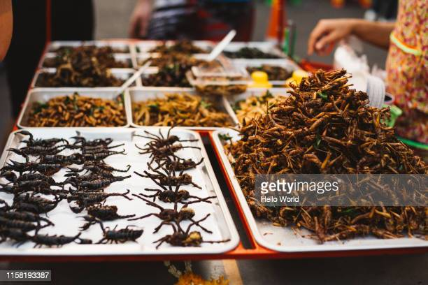 trays of exotic street foods in thailand - insect stock pictures, royalty-free photos & images