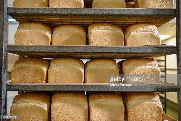 Trays of freshly baked bread in row