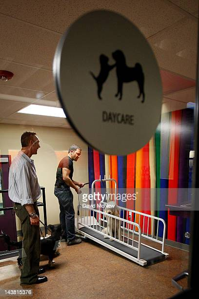 A treadmill is included in the daycare area at the grand opening of the fourth Pooch Hotel on May 3 2012 in Hollywood California The Pooch Hotel is...