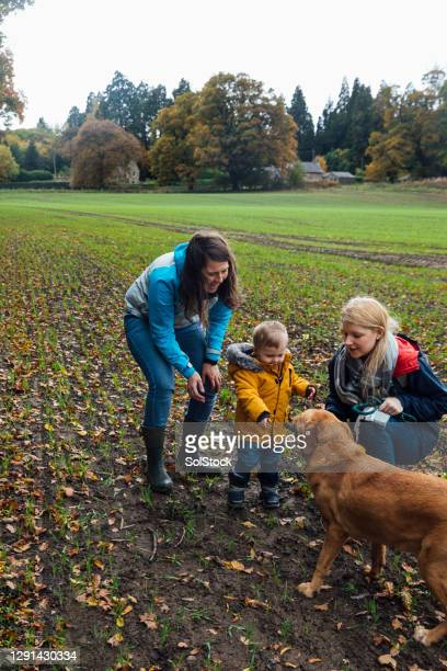 a treat for the dog - babyhood stock pictures, royalty-free photos & images