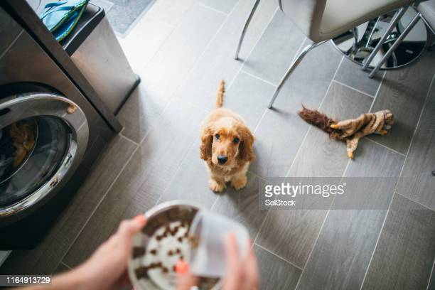 treat time for cute pup - dog stock pictures, royalty-free photos & images