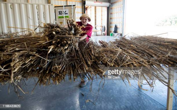 Treated hemp stalks are placed on racks before being made into wood flooring at HempWood in Murray Ky on Thursday Sept 5 2019