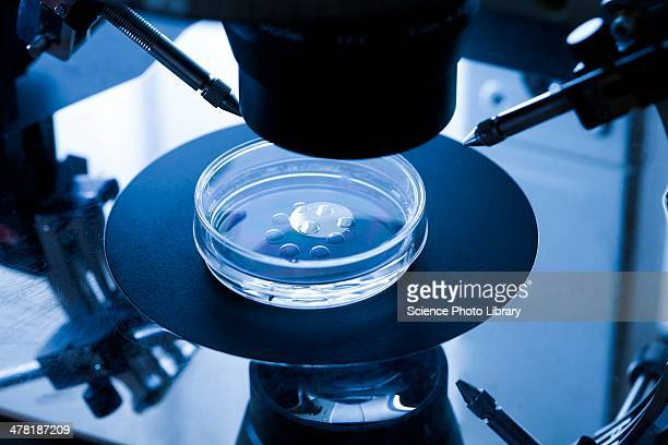 ivf treatment - human fertility stock pictures, royalty-free photos & images