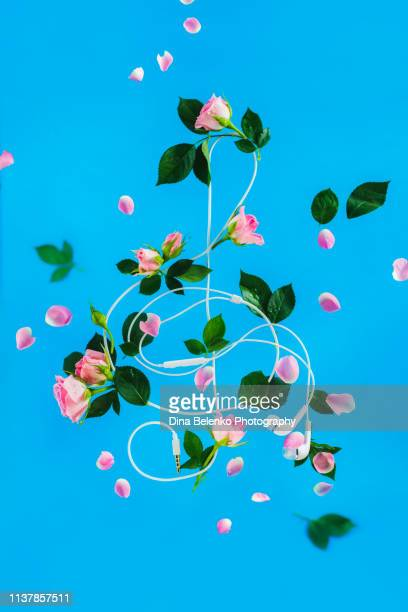 treble clef out of headphones with rose flowers and petals. romantic music flat lay. spring creative concept with copy space. - chiave di violino foto e immagini stock