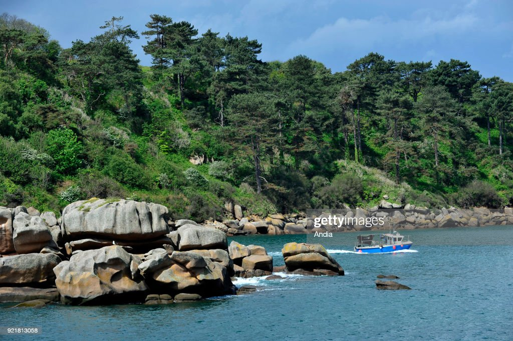 Treburden (Brittany, north-western France), along the 'Cote de Granit rose' (Pink Granite Coast): small fishing boat sailing back to the port, here in the 'passe du Castel' fairway, in front of the 'Ile Milliau' island.