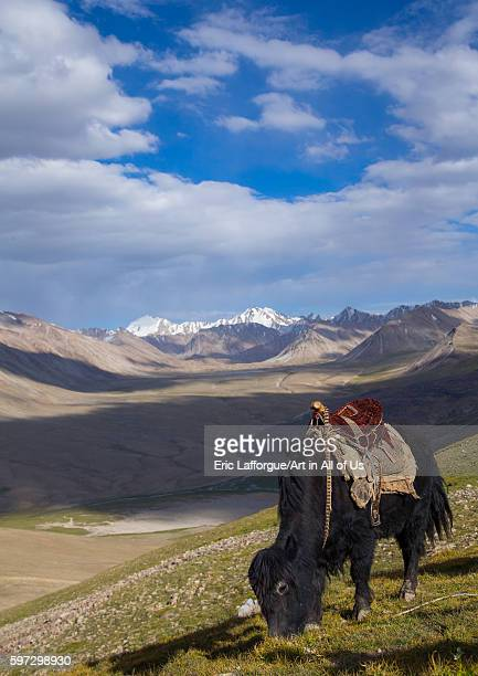 Treck in the pamir mountains with yaks big pamir wakhan Afghanistan on August 10 2016 in Wakhan Afghanistan