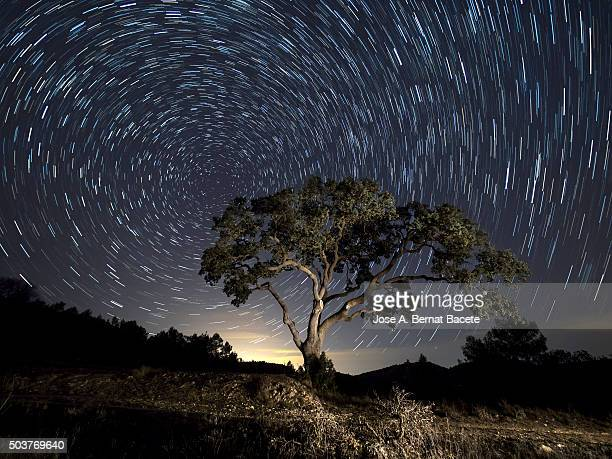 Tree, a night of clear sky with stars in movement