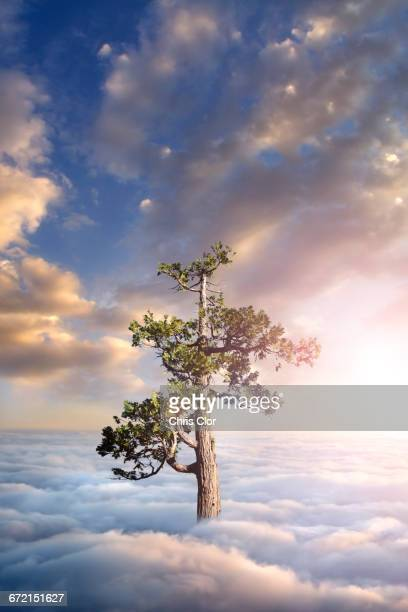 Tree above clouds