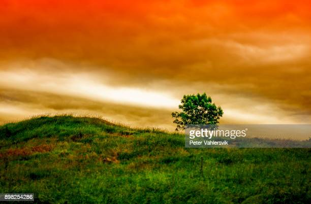 Tree against dramatic sunset sky