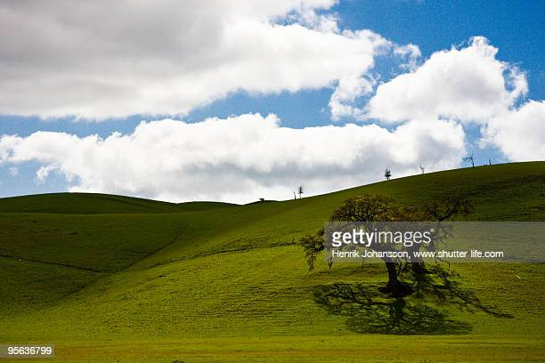 Tree against green hills and a cloudy sky