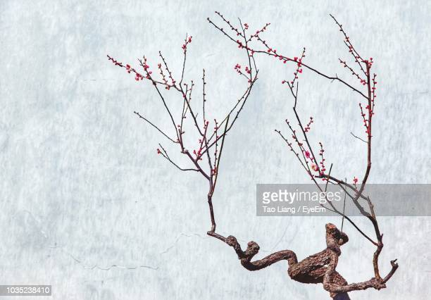 tree against waterfall - suzhou stock pictures, royalty-free photos & images