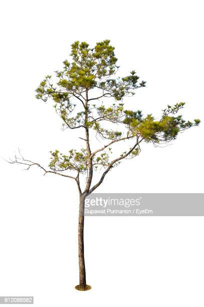 tree against white background - tree trunk stock pictures, royalty-free photos & images