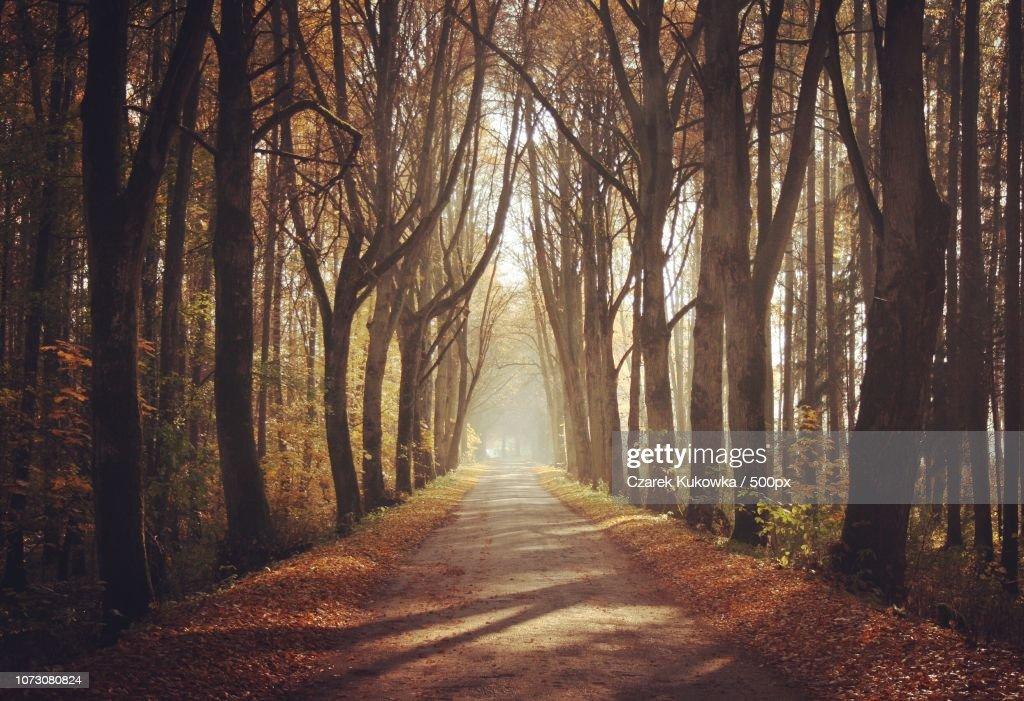 Tree alley in Masuria, Poland. : Stock Photo