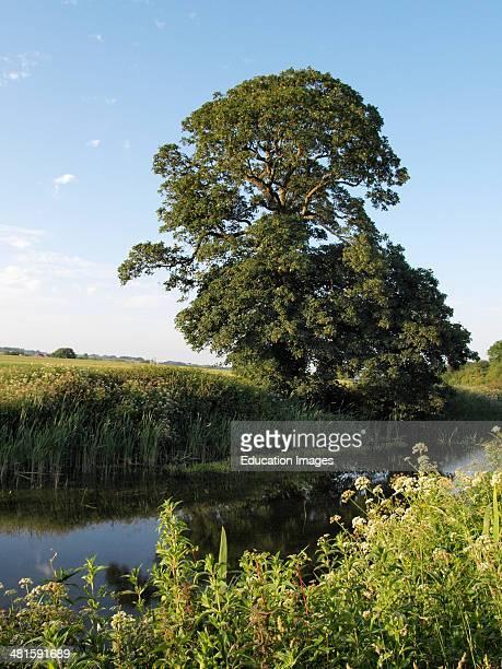 Tree along The Grand Western Canal near Sampford Peverell Devon
