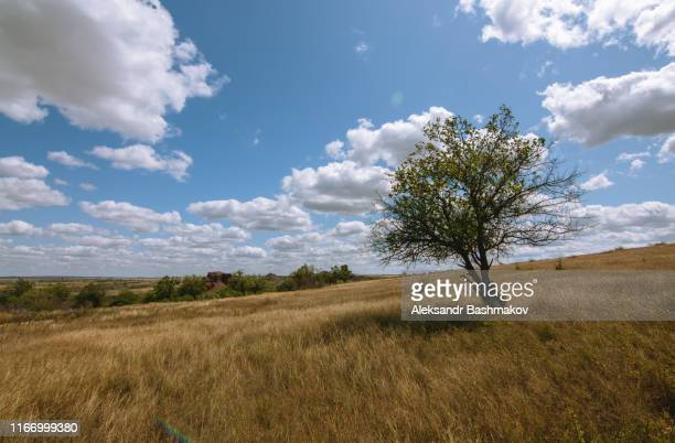 tree among the field - rostov on don stock pictures, royalty-free photos & images