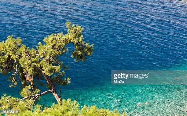 Tree and Aegean Sea